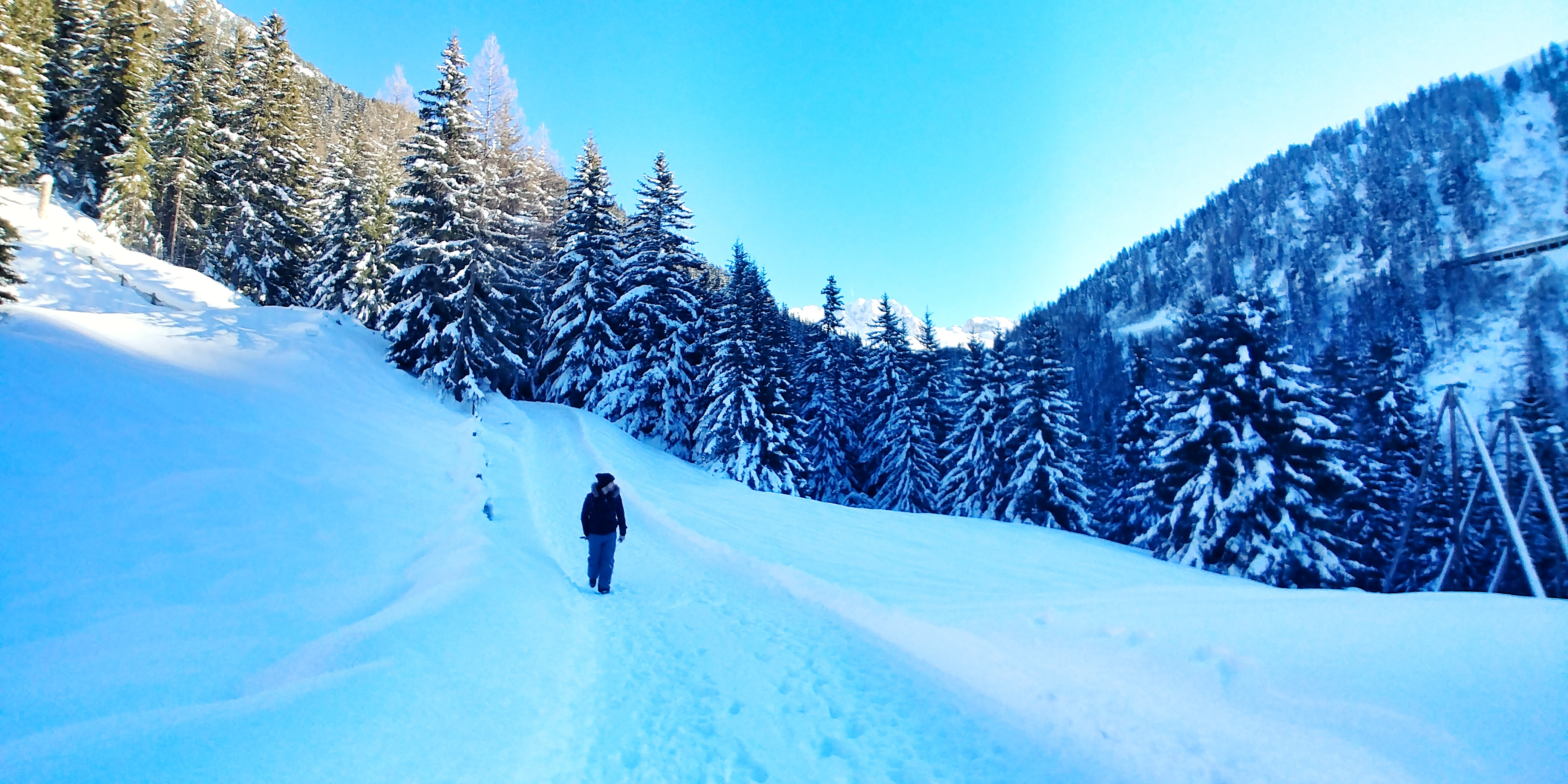 Walking through the pine forest in the French Alps