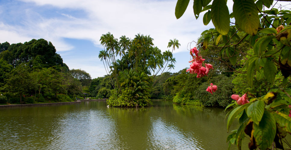 A pond with lush greenery