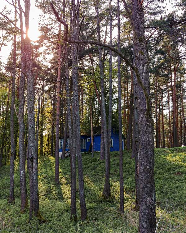 Pine forest with a wooden house in Belarus