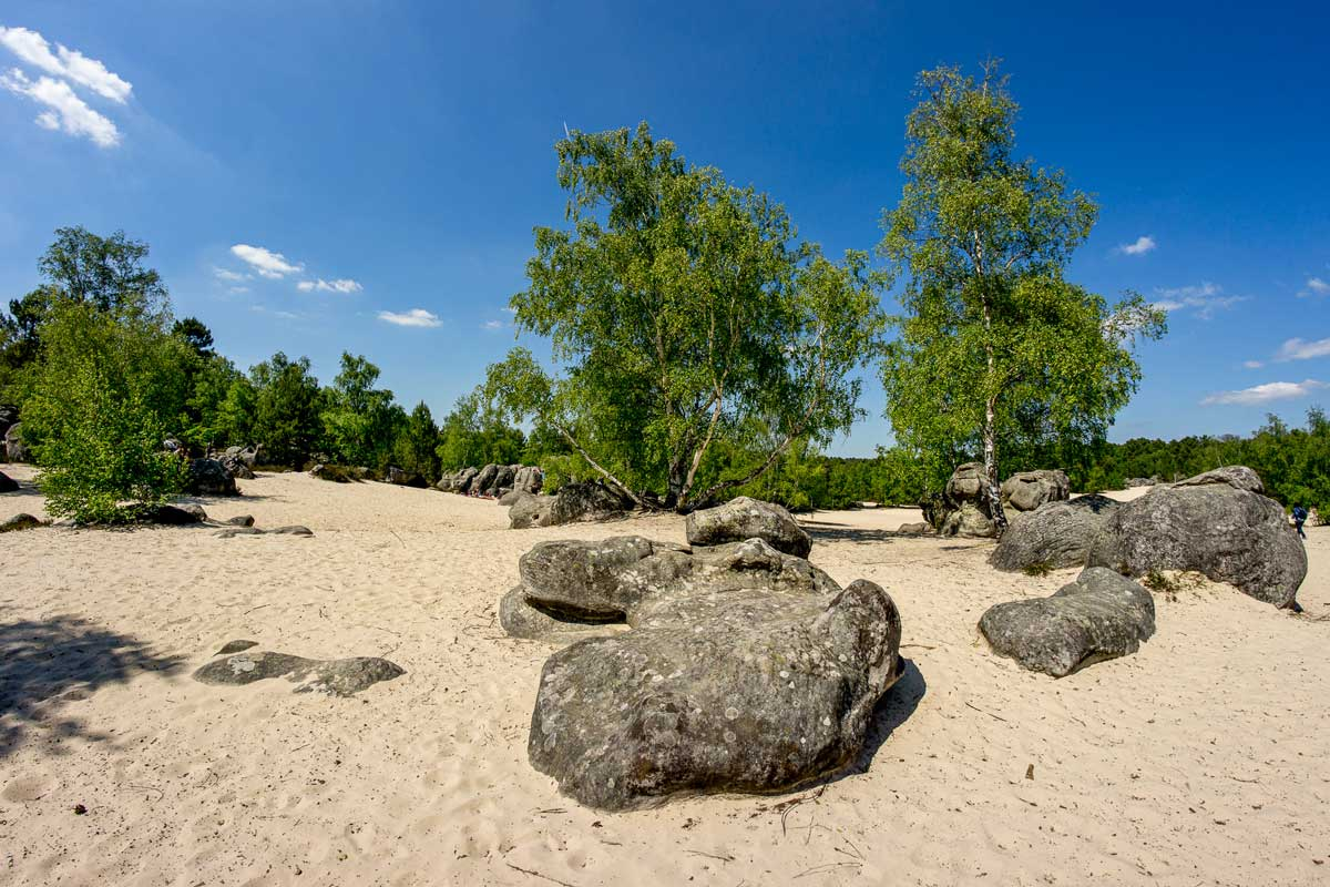 Sea sand with boulder rocks in the forest