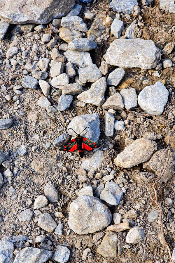 Red butterfly on the rocks